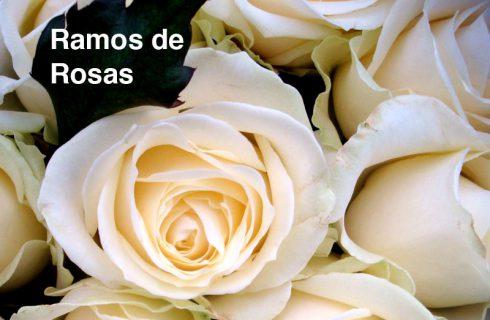 GipuzkoaDigital.com Viveros-Ducasse-Rosas