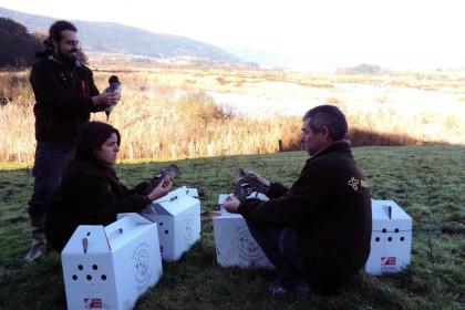 FOTO de de las nuevas tecnologías de monitorización de aves.