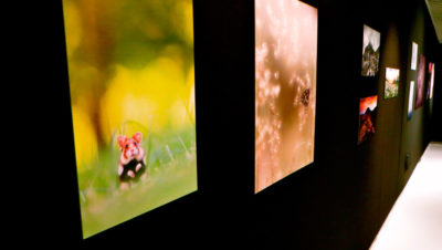 International Garden Photographer of the Year Donostia San Sebastián Euskadi Basque Country