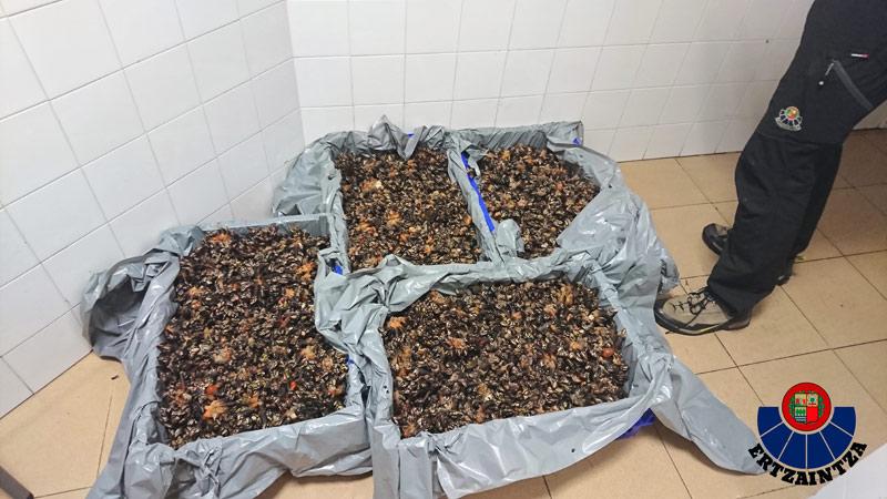 Departamento de InteriorGobierno Vasco biotopo protegido de San Juan de Gaztelugatxe
