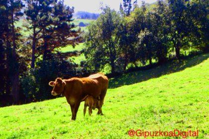 Deba Zumaia Foto GipuzkoaDigital.com Donostia San Sebastián